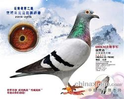 云南雪域高原挑战赛季军