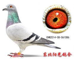 27、CHN2014-08-061086副本