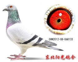 32、CHN2012-08-068133副本