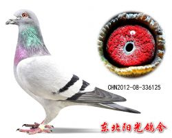 7、CHN2012-08-336125副本