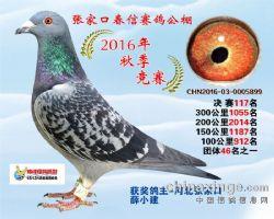 2016年秋季获奖鸽
