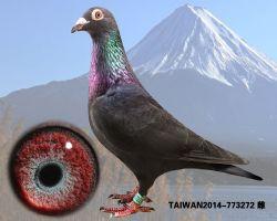 TAIWAN2014-773272