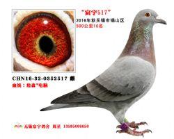 宸宇2517(已售)