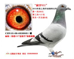 宸宇0931