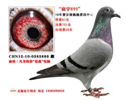 CHN15-10-0383899 雌