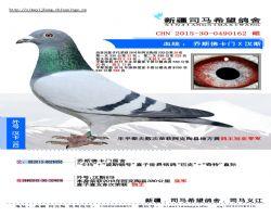 2015-30-0490162 副本