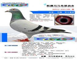 BELG2012-6321308 副本