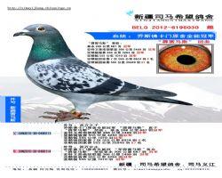 BELG2012-6196030 副本
