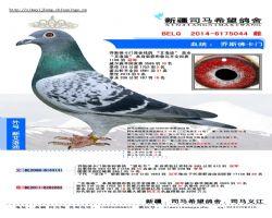 BELG2014-6175044 副本