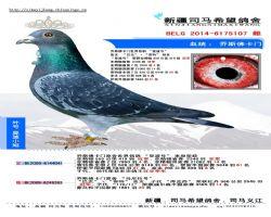 BELG2014-6175107 副本