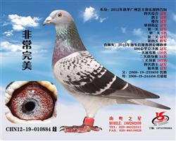 """""""非常完美""""四关四方向综合冠军"""