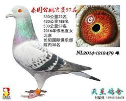 【泰国公棚获奖鸽】