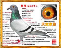 联发061(已售泉州)