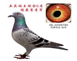 五关鸽王综合6名  精英赛季军