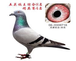 五关鸽王综合8名  精英赛季军