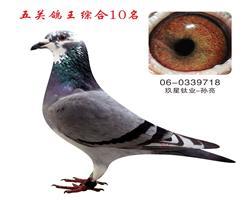 五关鸽王综合10名