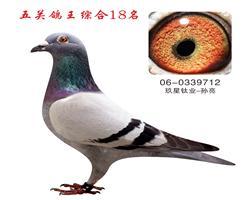 五关鸽王综合18名