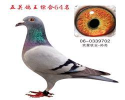 五关鸽王综合64名