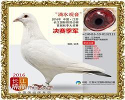 长江国际公棚决赛季军