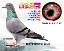 江苏长江国际公棚决赛276名