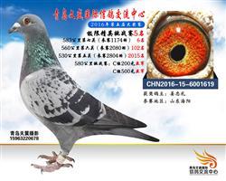 CHN2016-15-6001619