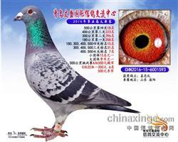 CHN2016-15-6001593
