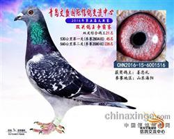 CHN2016-15-6001516