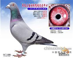 CHN-2016-15-6001561