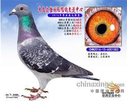 CHN-2016-15-6001582