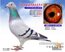 CHN2016-15-6001660