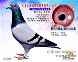 CHN2016-15-6000311