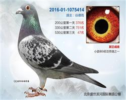 2016盛世滨河公棚决赛47名(已售)