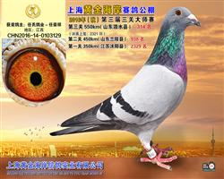 上海黄金海岸公棚决赛314名