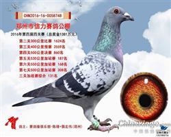 河南郑州信力公棚加强三关赛131名