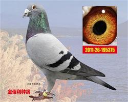 """胡本""""380""""现存唯一最年轻直孙"""