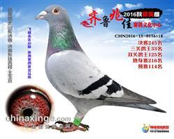 16年齐鲁兆佳决赛245名