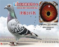 16年山东舜峰公棚决赛215名