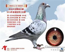 中亚364