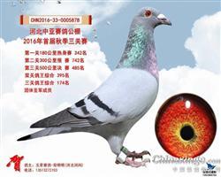 中亚485