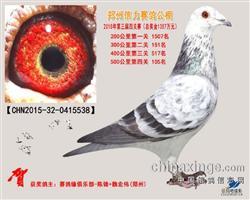 郑州信力公棚决赛105名