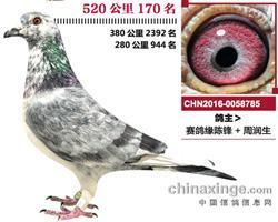 北京花乡公棚决赛170名