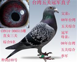 台湾五关综合冠军直子