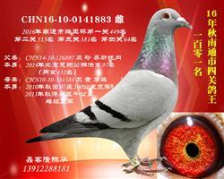 CHN16-10-0141883
