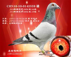 CHN16-10-0142559