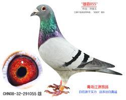 """""""雄霸055""""―武�t天"""