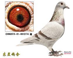 战神174(已售)