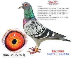 """""""风云284""""-佛科克"""