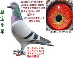 聚宝季军,此鸽,22000元拍回