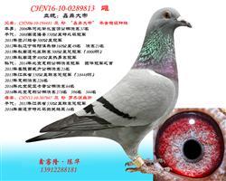 CHN16-10-0289813