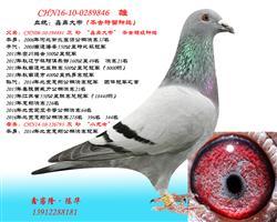 CHN16-10-0289846